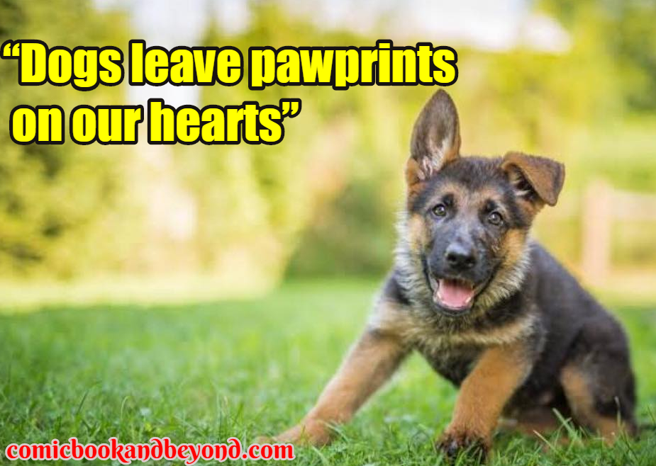 dog popular quotes