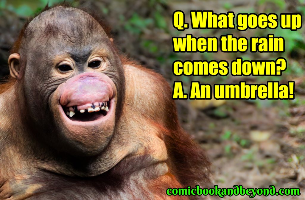 funny jokes and riddles